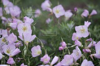 ピンクの花の写真・画像素材[4432939]