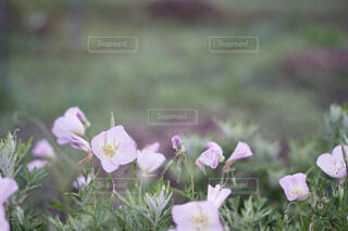 ピンクの花の写真・画像素材[4432940]