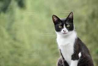 猫のクローズアップの写真・画像素材[4436625]