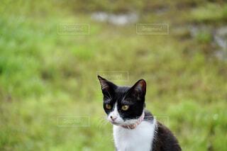 猫のクローズアップの写真・画像素材[4438452]