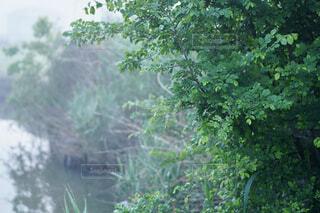 水路の写真・画像素材[4454472]
