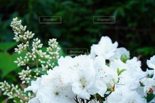 花のクローズアップの写真・画像素材[4483250]