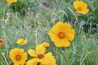 花のクローズアップの写真・画像素材[4556434]