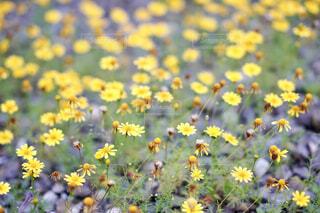 花のクローズアップの写真・画像素材[4564556]