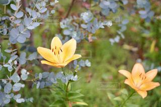 花のクローズアップの写真・画像素材[4566888]