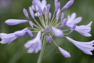 花のクローズアップの写真・画像素材[4582487]