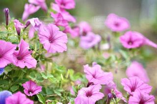 花のクローズアップの写真・画像素材[4592324]