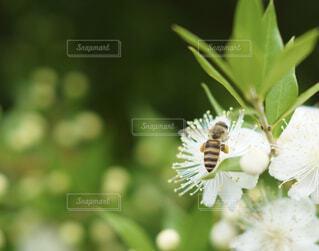 花と蜜蜂の写真・画像素材[4592457]