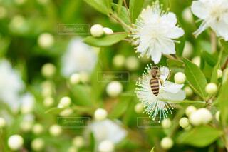 花と蜜蜂の写真・画像素材[4592474]