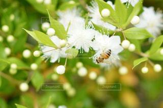 花と蜜蜂の写真・画像素材[4592472]