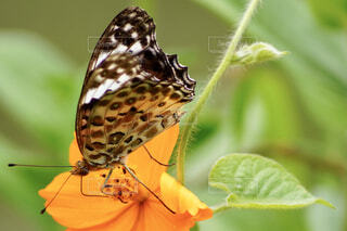花と蝶のクローズアップの写真・画像素材[4595303]