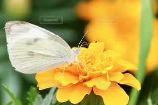 花と蝶のクローズアップの写真・画像素材[4595340]