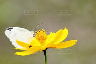 花と蝶のクローズアップの写真・画像素材[4595335]