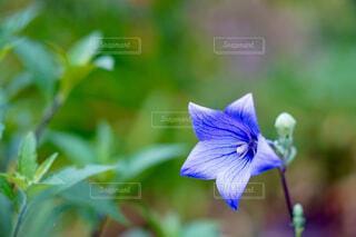 花のクローズアップ写真の写真・画像素材[4620550]