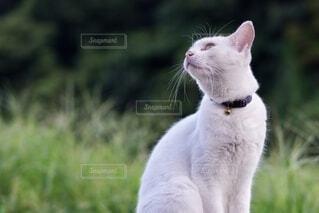 猫のクローズアップの写真・画像素材[4739991]