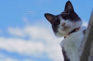 猫のクローズアップの写真・画像素材[4739994]