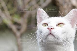 ネコのクローズアップ写真の写真・画像素材[4800293]