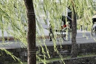 柳の木の写真・画像素材[4836708]