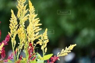 カラフルな花の写真の写真・画像素材[4848703]