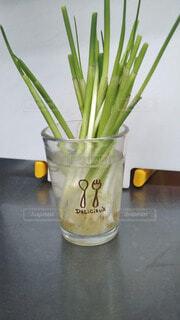 テーブルの上に座る花で満たされた花瓶の写真・画像素材[4771720]