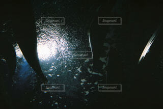 水槽を見上げるの写真・画像素材[4392220]