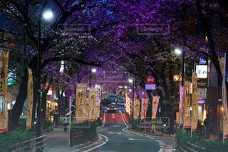 桜坂の写真・画像素材[4394578]