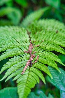 緑の植物アップの写真・画像素材[4399207]