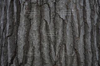 樹皮壁紙の写真・画像素材[4399214]