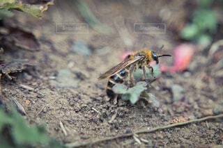 歩く蜂の写真・画像素材[4399209]