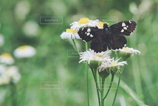 花と虫の写真・画像素材[4399210]
