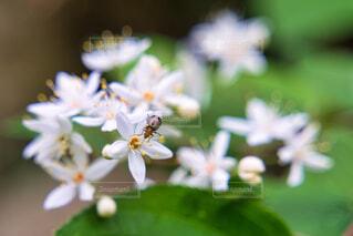 蜜を吸う虫の写真・画像素材[4399213]