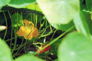 お花のかくれんぼの写真・画像素材[4393588]