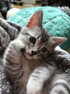 金運を呼ぶ招き猫の写真・画像素材[352422]