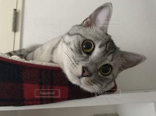 目を見開く猫の写真・画像素材[1064744]
