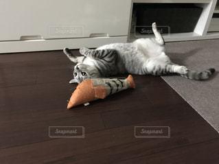 死んだ魚の振りを続ける芸達者な猫の写真・画像素材[1064747]