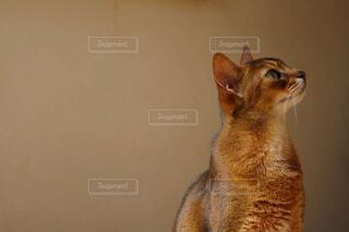 上向く猫の写真・画像素材[4434691]
