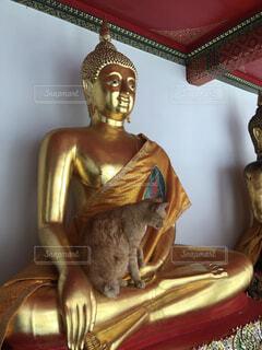 仏像に座る猫の写真・画像素材[4568120]