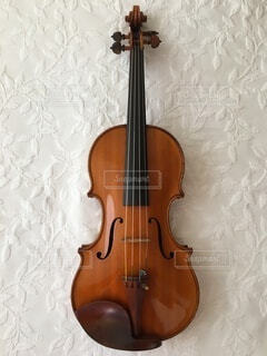 バイオリンの写真・画像素材[4817443]