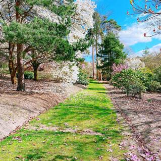 桜ガーデンの写真・画像素材[4396136]