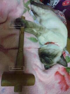 猫ハンマーの写真・画像素材[4416890]