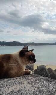 何か考えているようで考えていない猫の写真・画像素材[4416888]