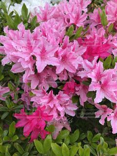 花の写真・画像素材[508765]