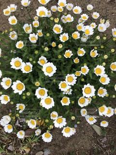 近くの花のアップ - No.1117172