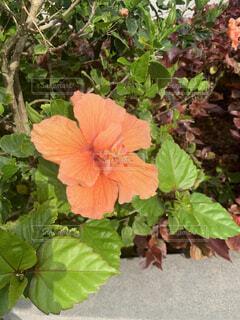 植物のクローズアップの写真・画像素材[4399704]