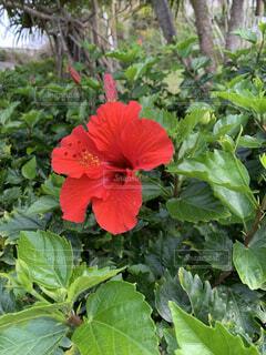 庭の植物の写真・画像素材[4399708]