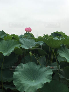 植物のクローズアップの写真・画像素材[4408347]