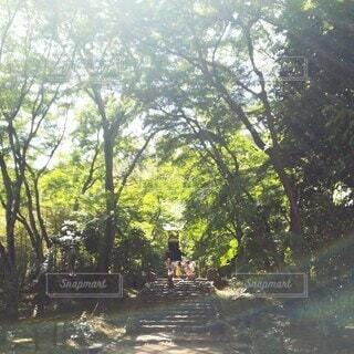 陽射しが差し込む木々の中の楽しい時間の写真・画像素材[4405733]