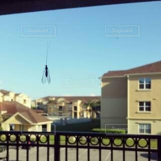 建物の眺めが見える窓にとまる虫の写真・画像素材[4405986]