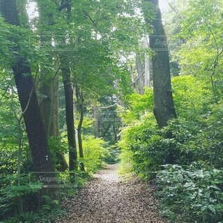 森林のトレイルパスの写真・画像素材[4416669]