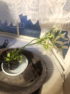 食虫植物の花の写真・画像素材[4405282]
